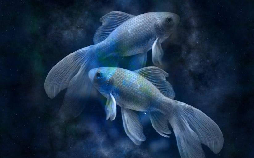 balık burcunun genel özellikleri ve balık burcu tarihi