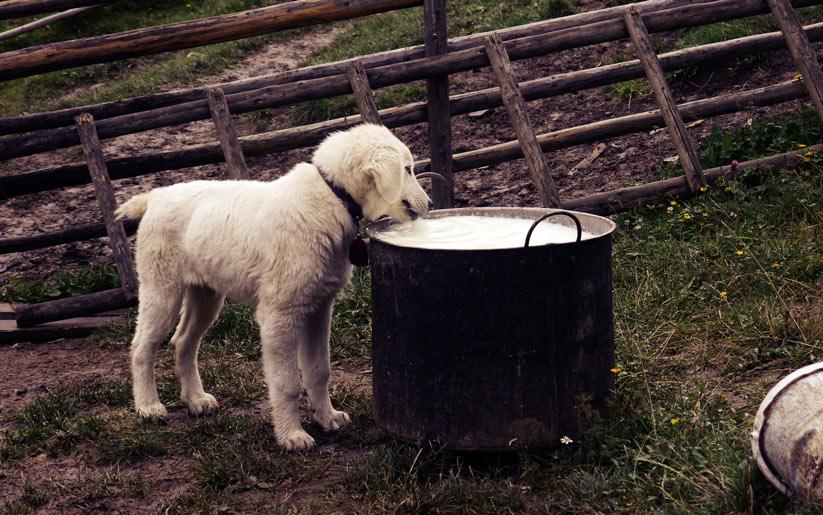 hayvan beslerken nelere dikkat edilmeli?