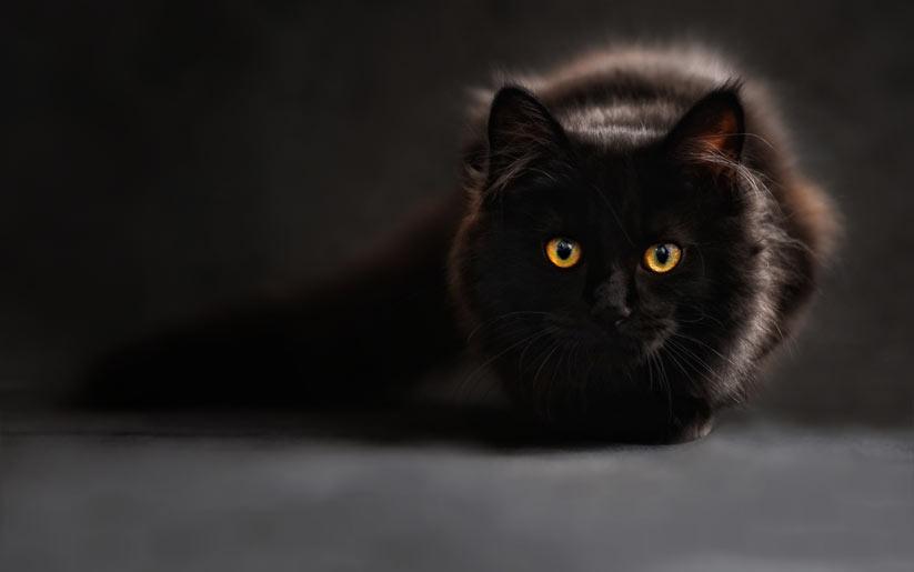 Kara kedi batıl inancı nedir