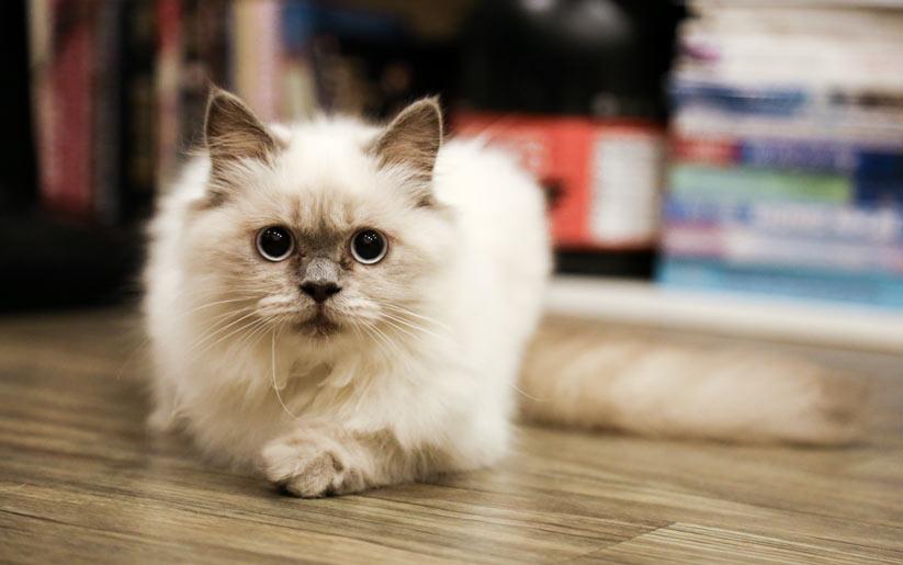 kedi beslemenin zorlukları nelerdir?