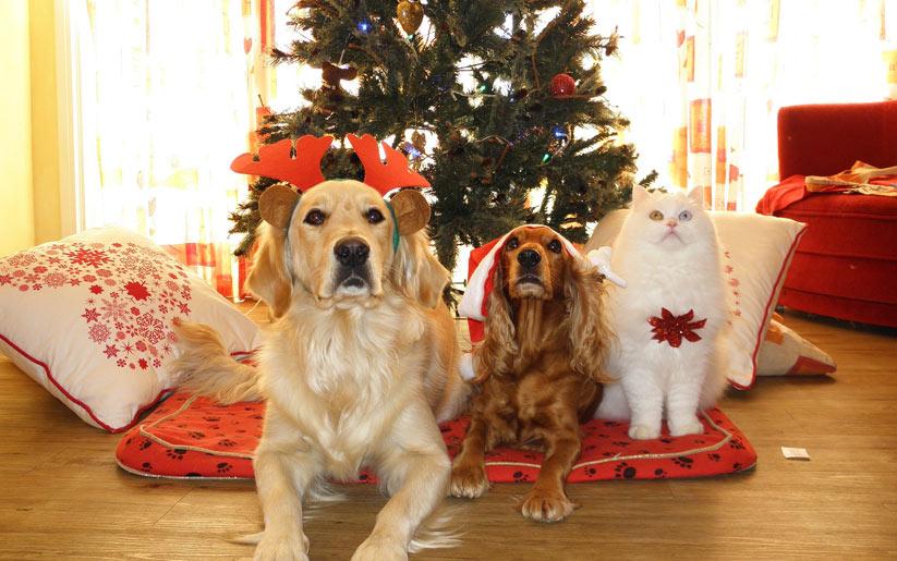 Kedi ve köpek alırken dikkat edilmesi gerekenler nelerdir?