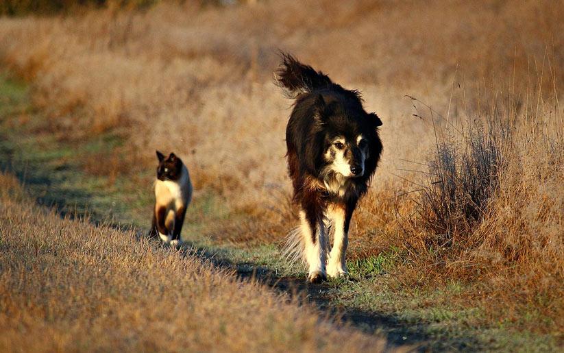 evcil hayvan olarak kediler ve köpekler