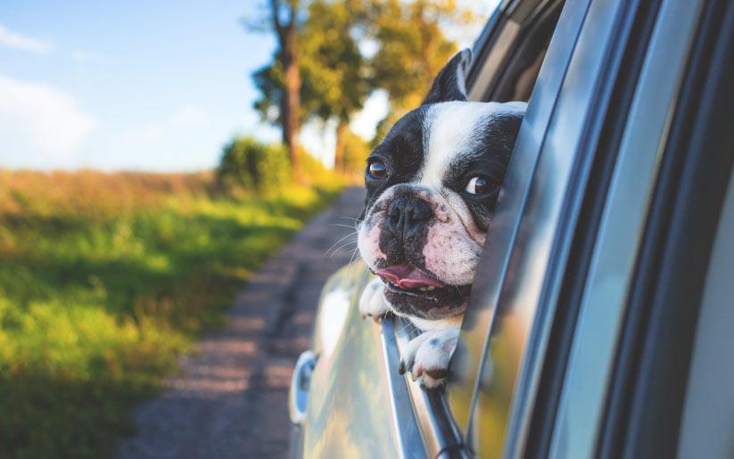 köpek beslemenin kolaylıkları nelerdir?