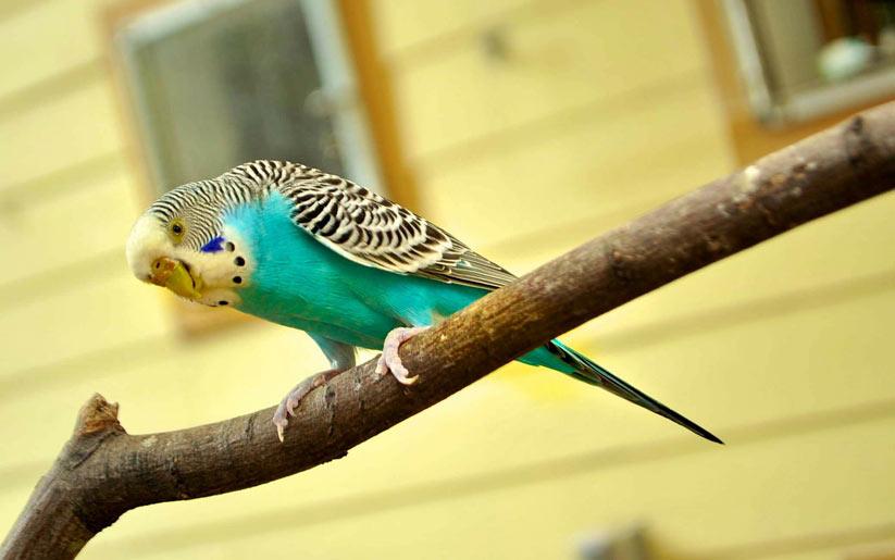 evde kuş beslemek