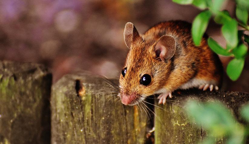 fare'nin özellikleri