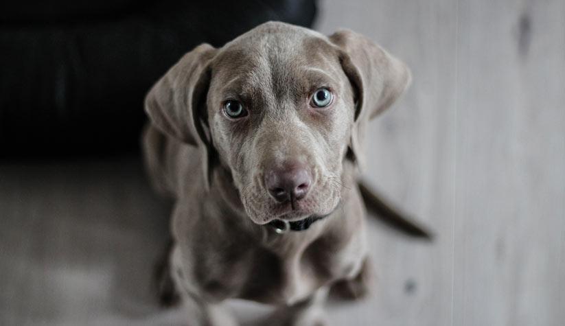 köpek'in özellikleri