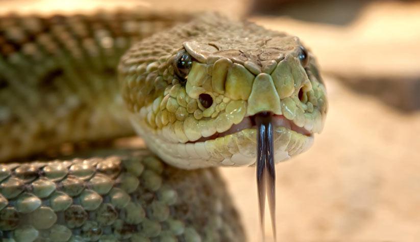 yılan'ın özellikleri